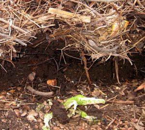 compost_940-square